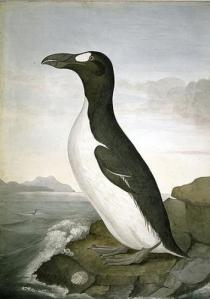 Great Auk Painting.preview